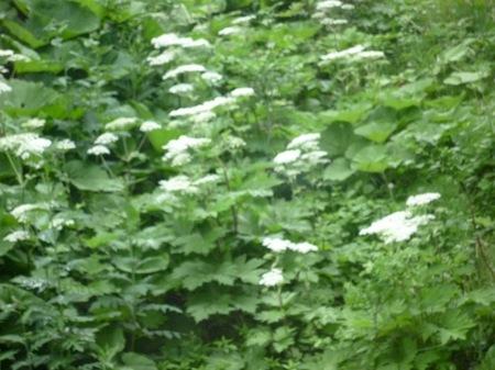 004藻岩山31.JPG