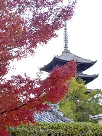 101奈良公園3.JPG