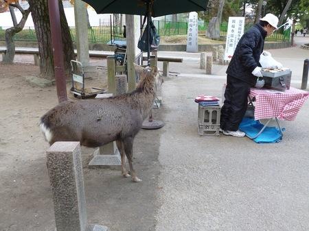 101奈良公園8.JPG
