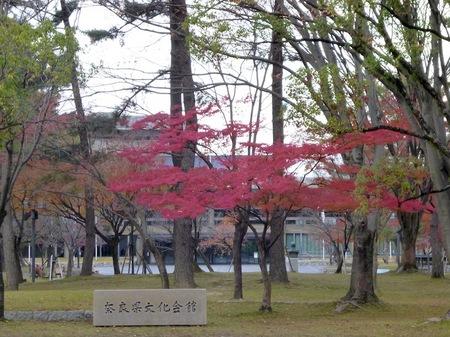 101奈良公園9.JPG