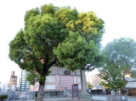 162四天王寺7.JPG