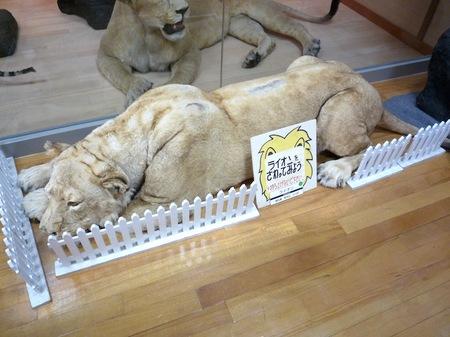 456岸和田自然資料館10.JPG