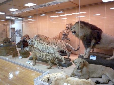 456岸和田自然資料館11.JPG