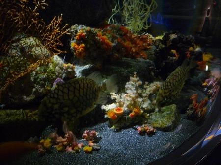 506水族館10.JPG