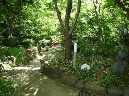 629中自然の森1.JPG