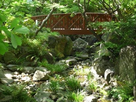 629中自然の森11.JPG