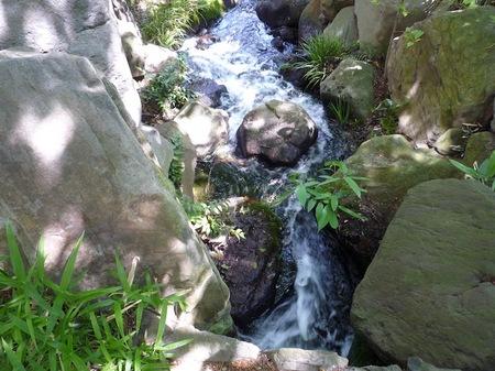 629中自然の森15.JPG