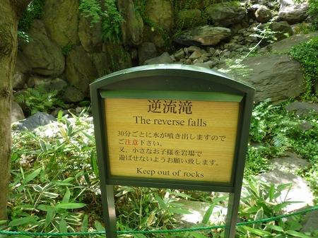 629中自然の森4.JPG