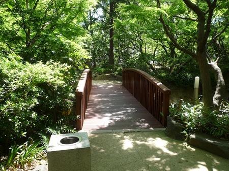 629中自然の森5.JPG