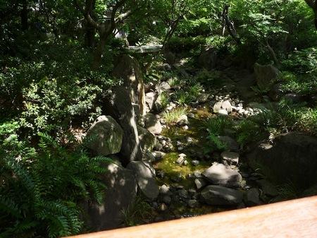 629中自然の森6.JPG