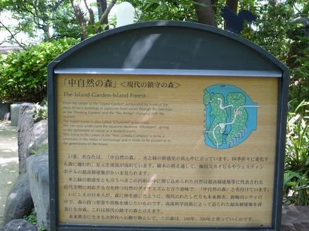 629中自然の森7.JPG