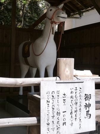 729針綱神社3.JPG