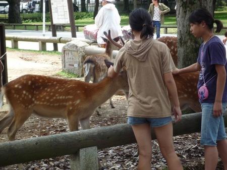 321奈良公園1.JPG