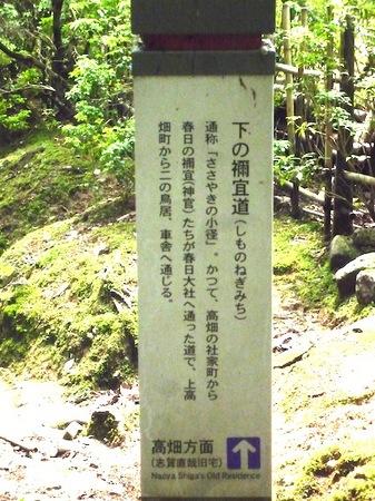 321奈良公園2.JPG