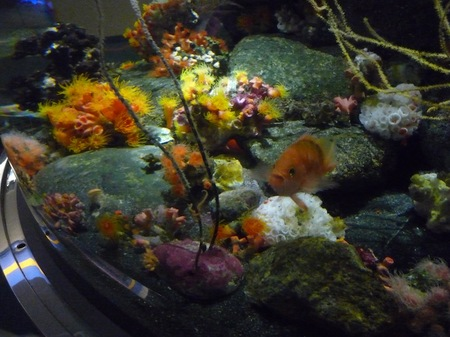 506水族館09.JPG