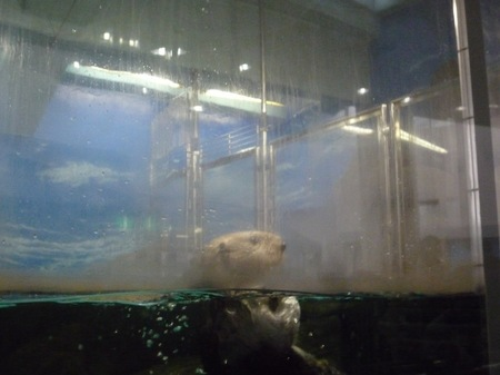 506水族館26.JPG