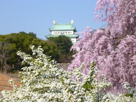 673名古屋城散歩1.JPG